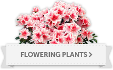 Flowering Plant Delivery to Everett, Seattle, Lynnwood, WA
