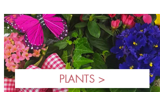 Get ready for Spring with our selection of blooming and green plants!